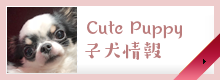 cutepuppy子犬情報